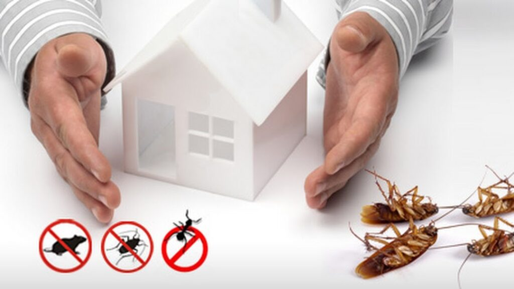 Going Eco-friendly for Pest Control and Management